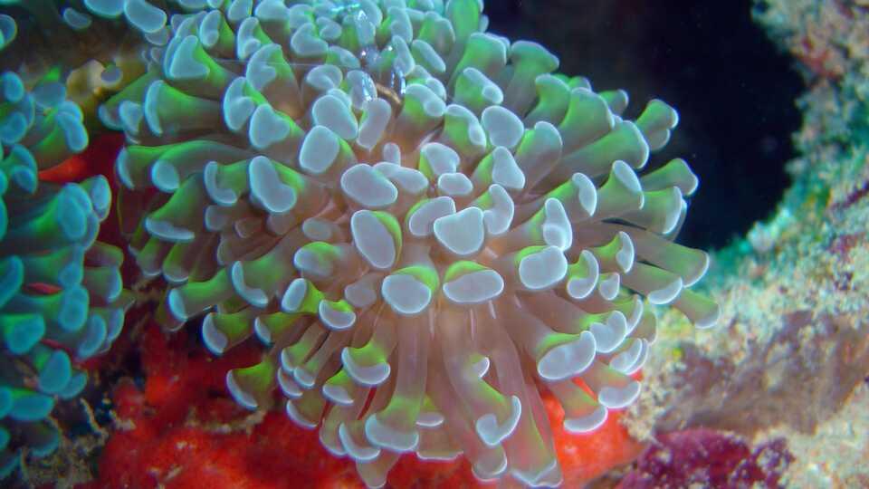 NightSchool: Hi-Res Reefs