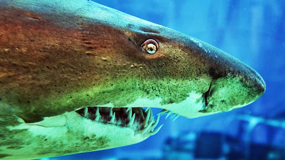 NightSchool: Sharks Jaws & Maws