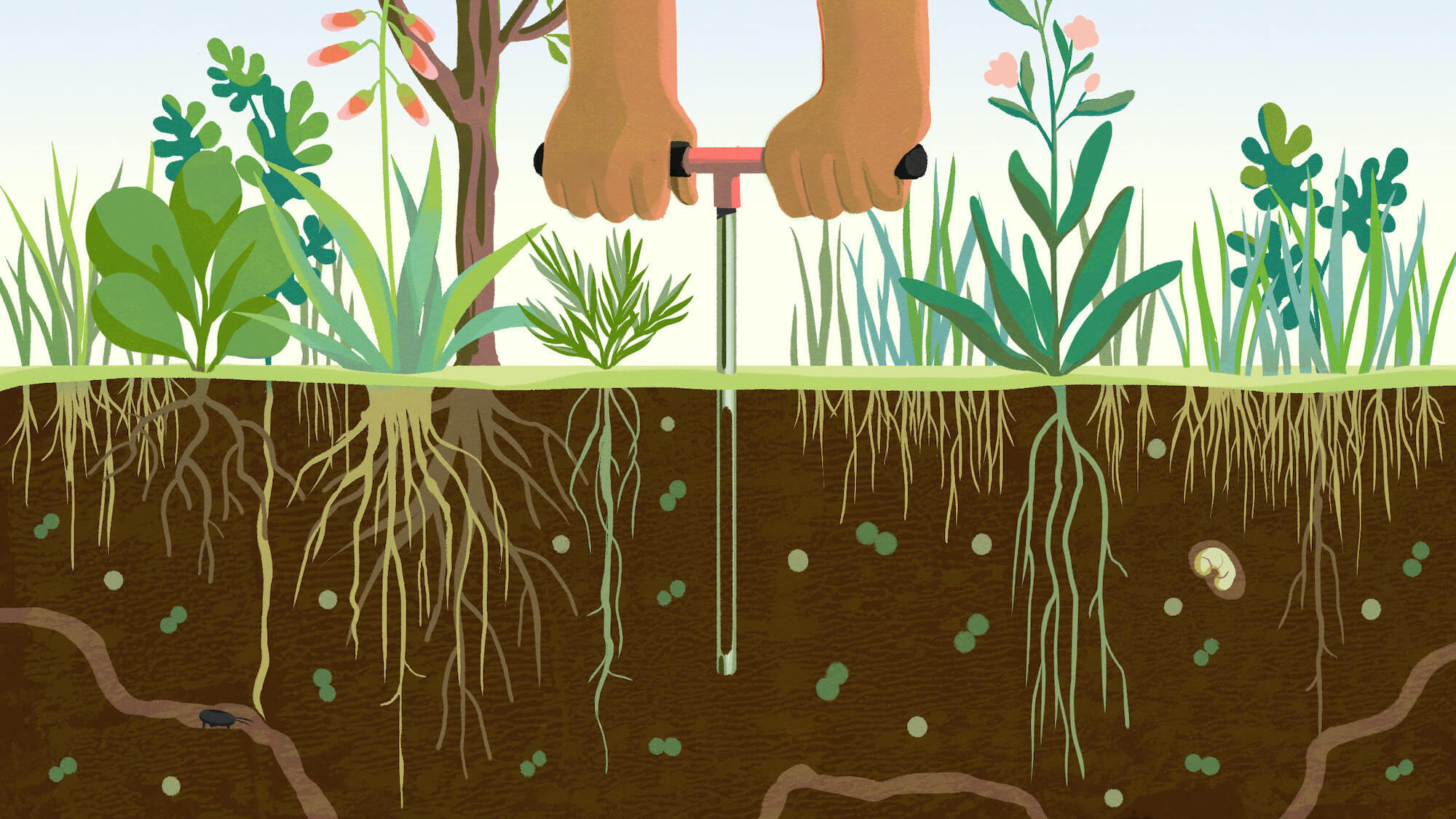 Growing Regenerative Agriculture – Pathways and Potential for Scaling Up