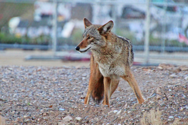 Community and Justice: Urban Conservation and Human Wildlife Coexistence