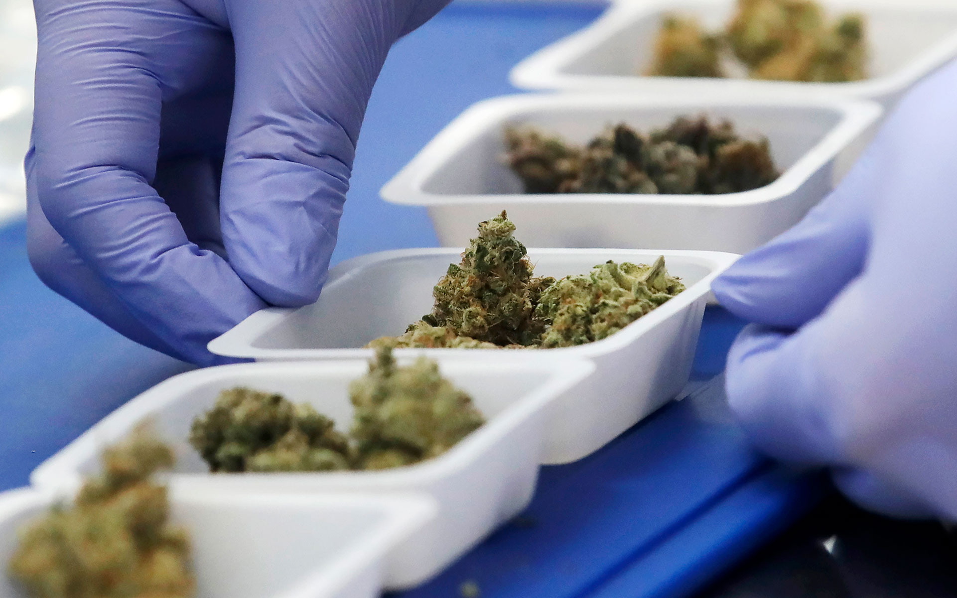 What Are You Smoking? Demystifying Cannabis Regulation and Testing