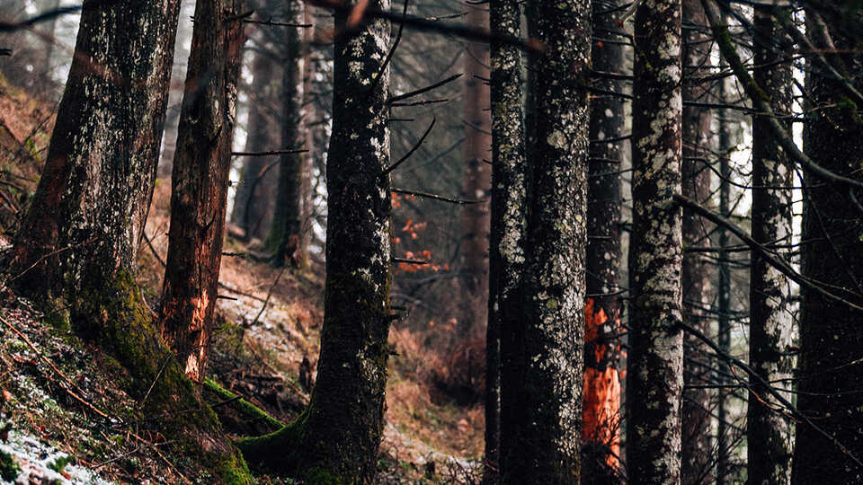 NightSchool: Resilient Forests