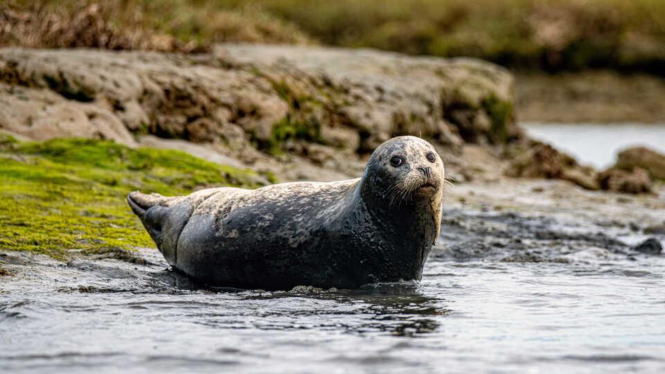 Marine Mammal Identification Masterclass