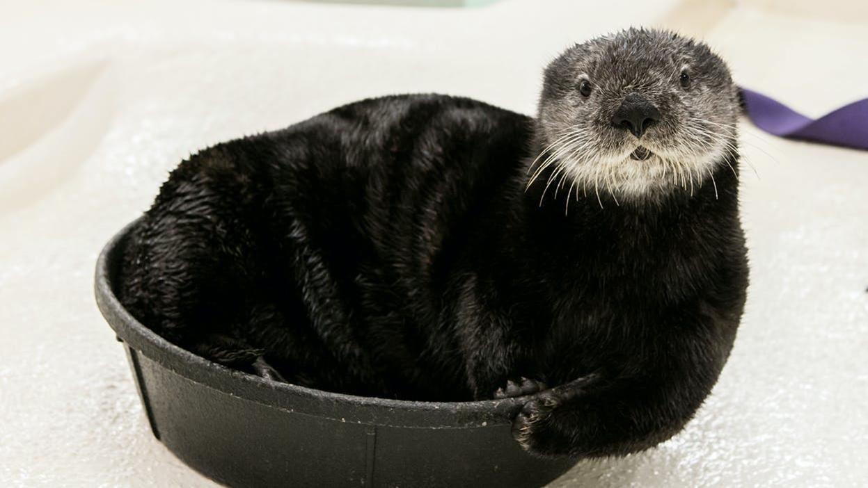 Virtual Sea Otter Encounter