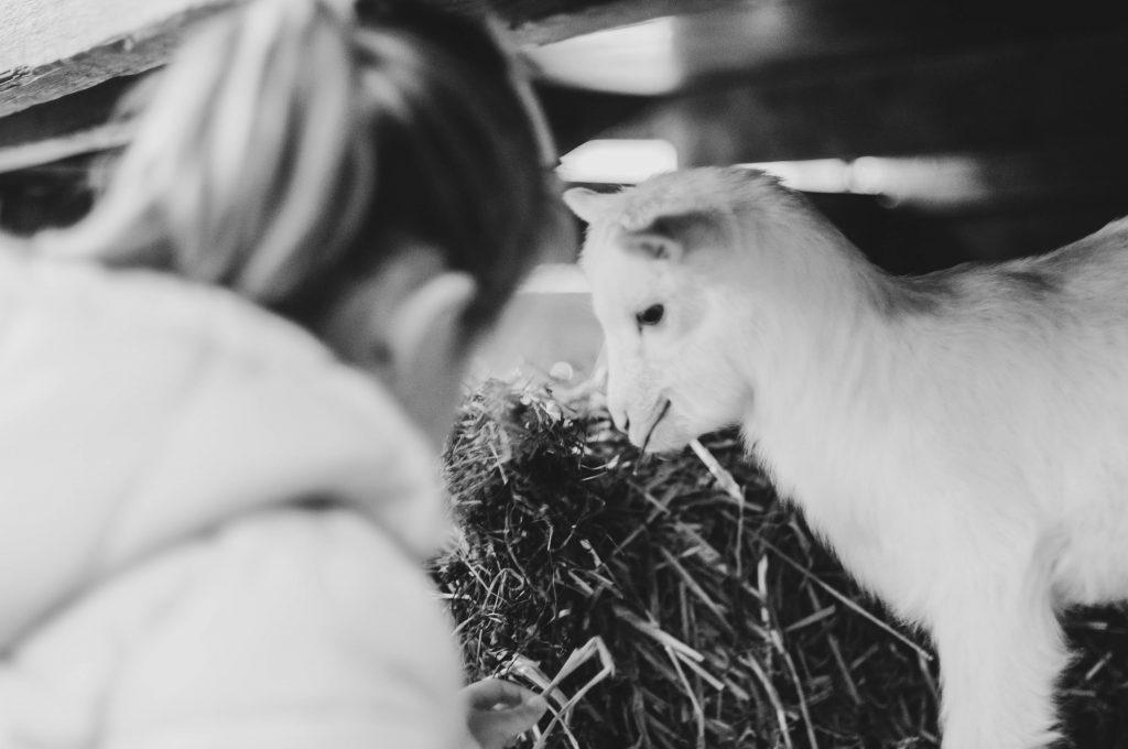 Geitenboerderij, fazenda de cabraas, Amsterdam, The Brave New Life