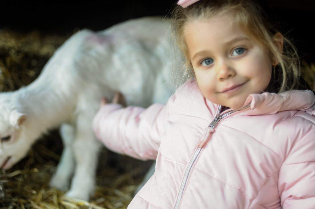 Fazenda de cabras, Amsterdam