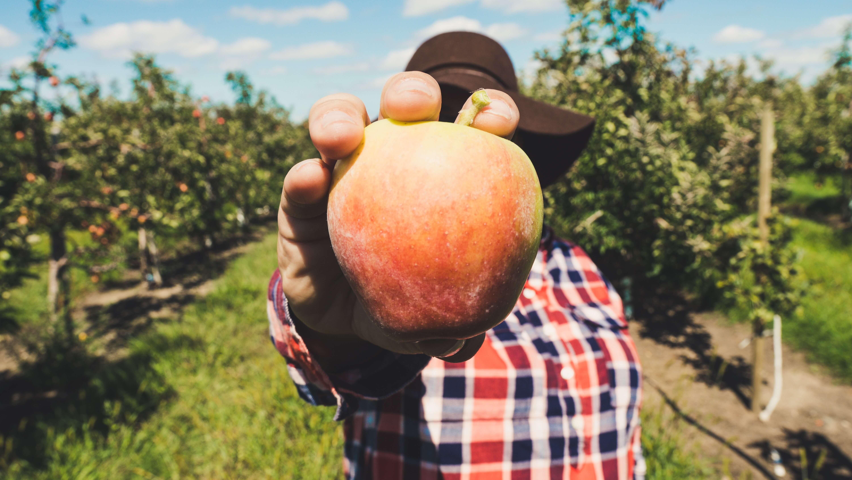 producer with an apple