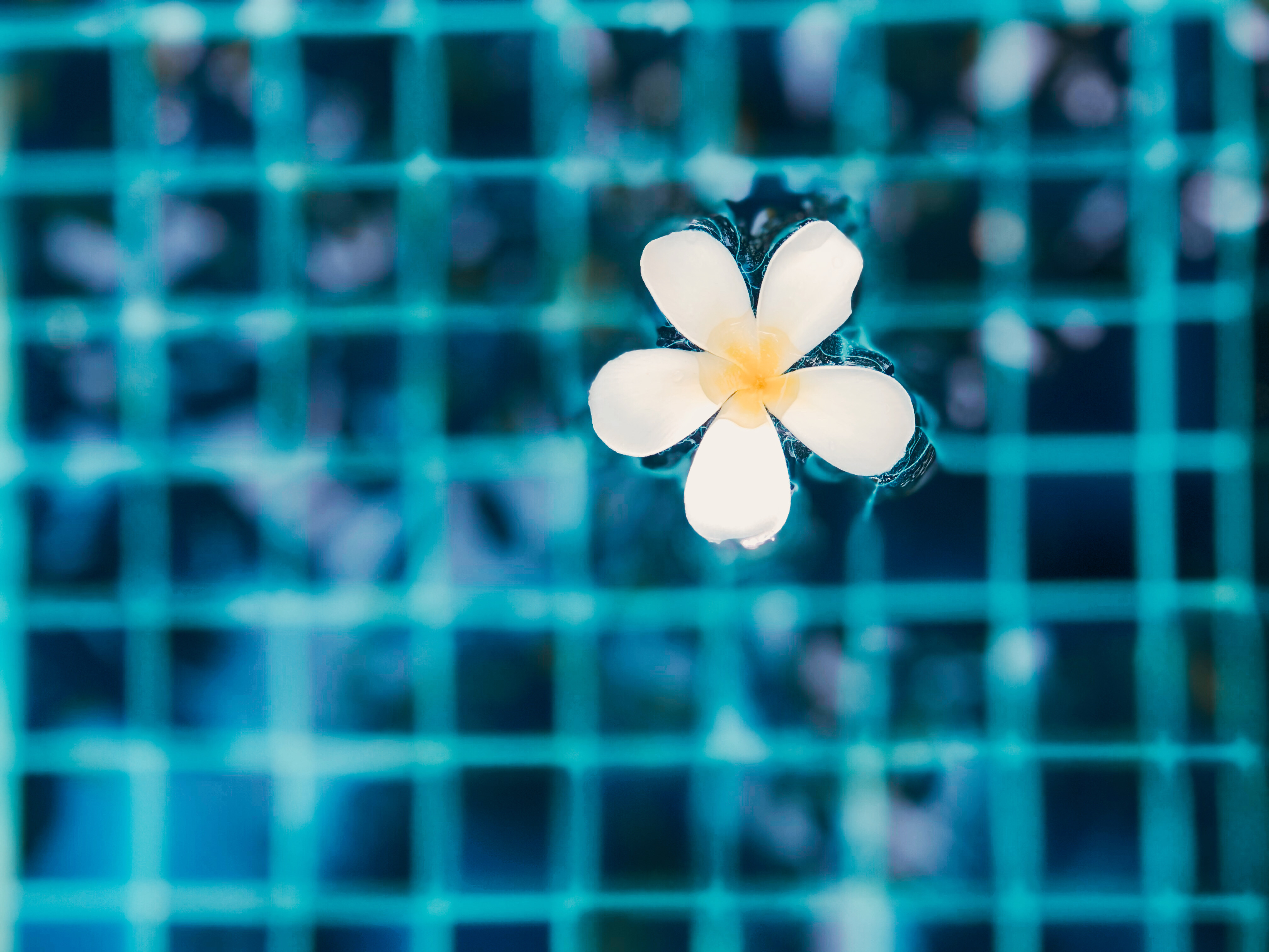 Flower in the swimming pool with nature view