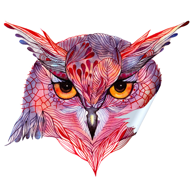 Owl Face (Owla) Sticker