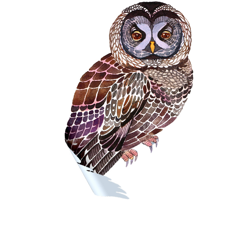 Lacy Owl Sticker