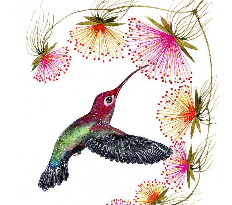 Blooming, Hummingbird Art Print