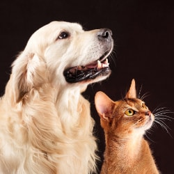 a dog and cat looking up
