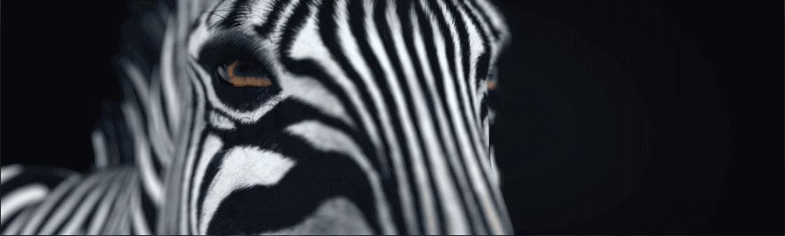 Wicked Pixels Animation VFX