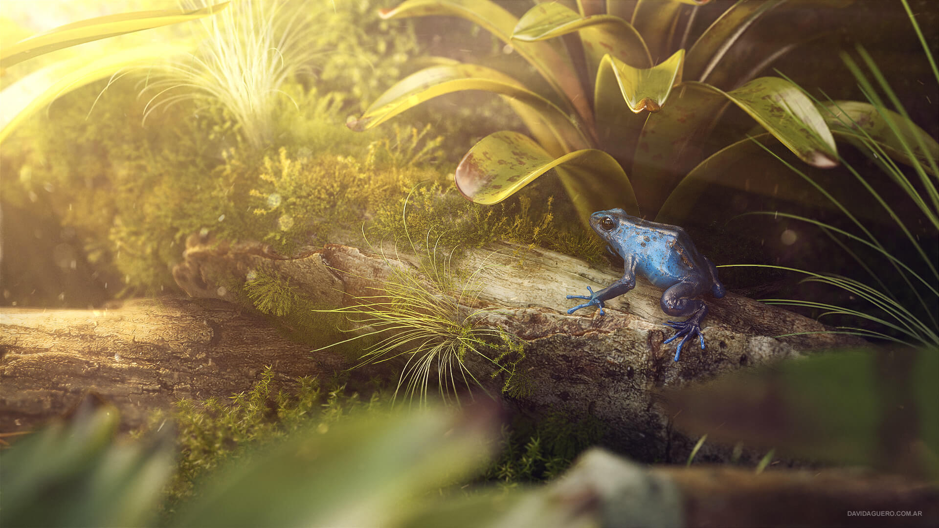 David Aguero realistic frog