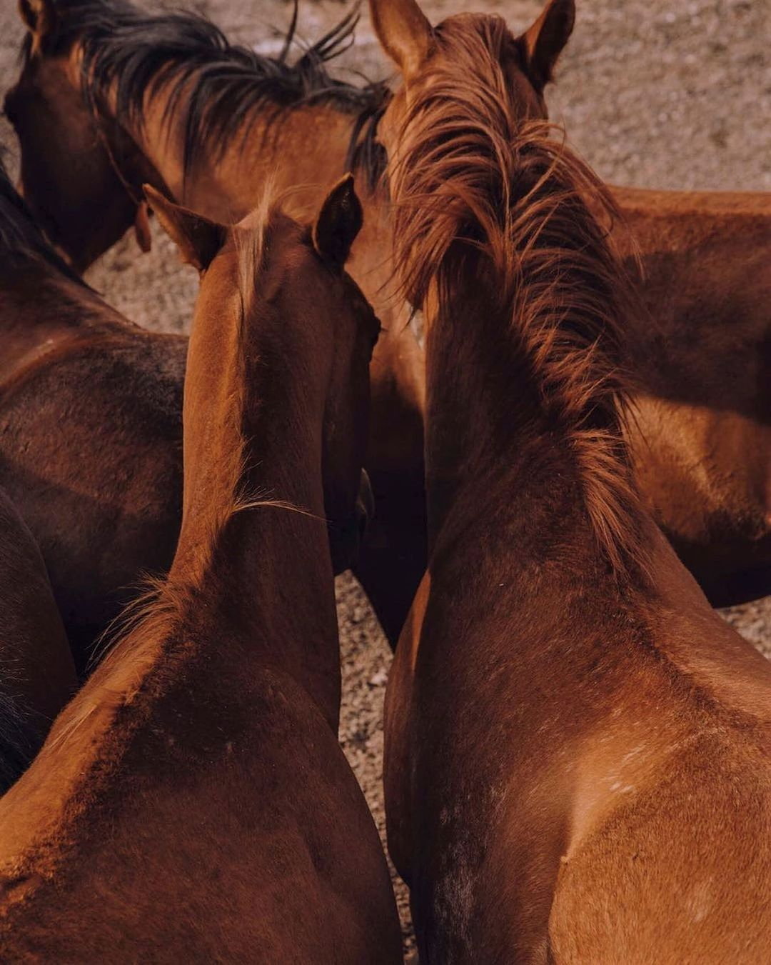 Close-Cropped image of horses gathered together in a field.