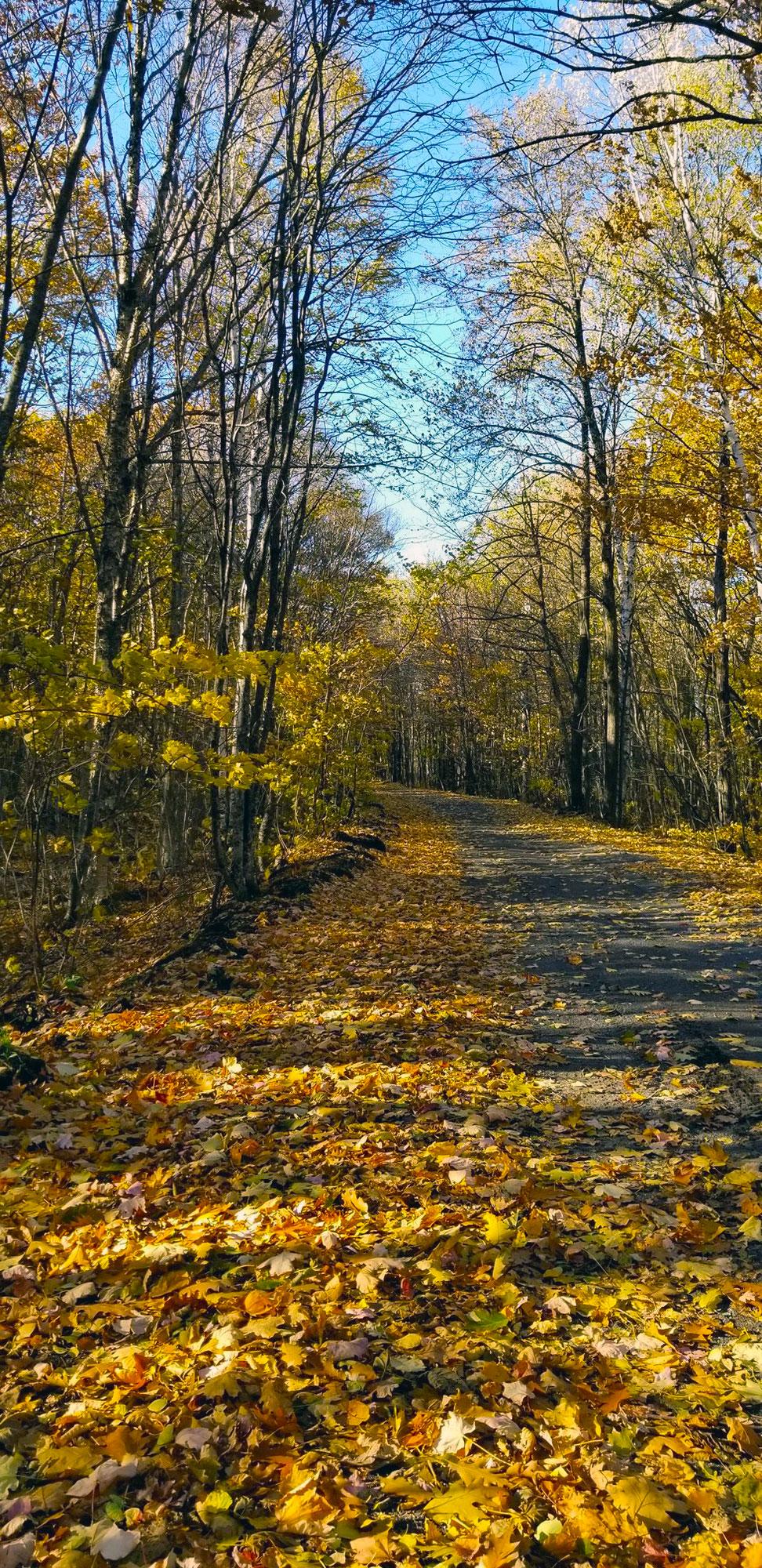 trail 317 near trailside lodge motel in calumet michigan in autumnautumn