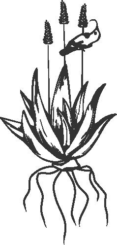 Nix Matters News Logo aloe transparent