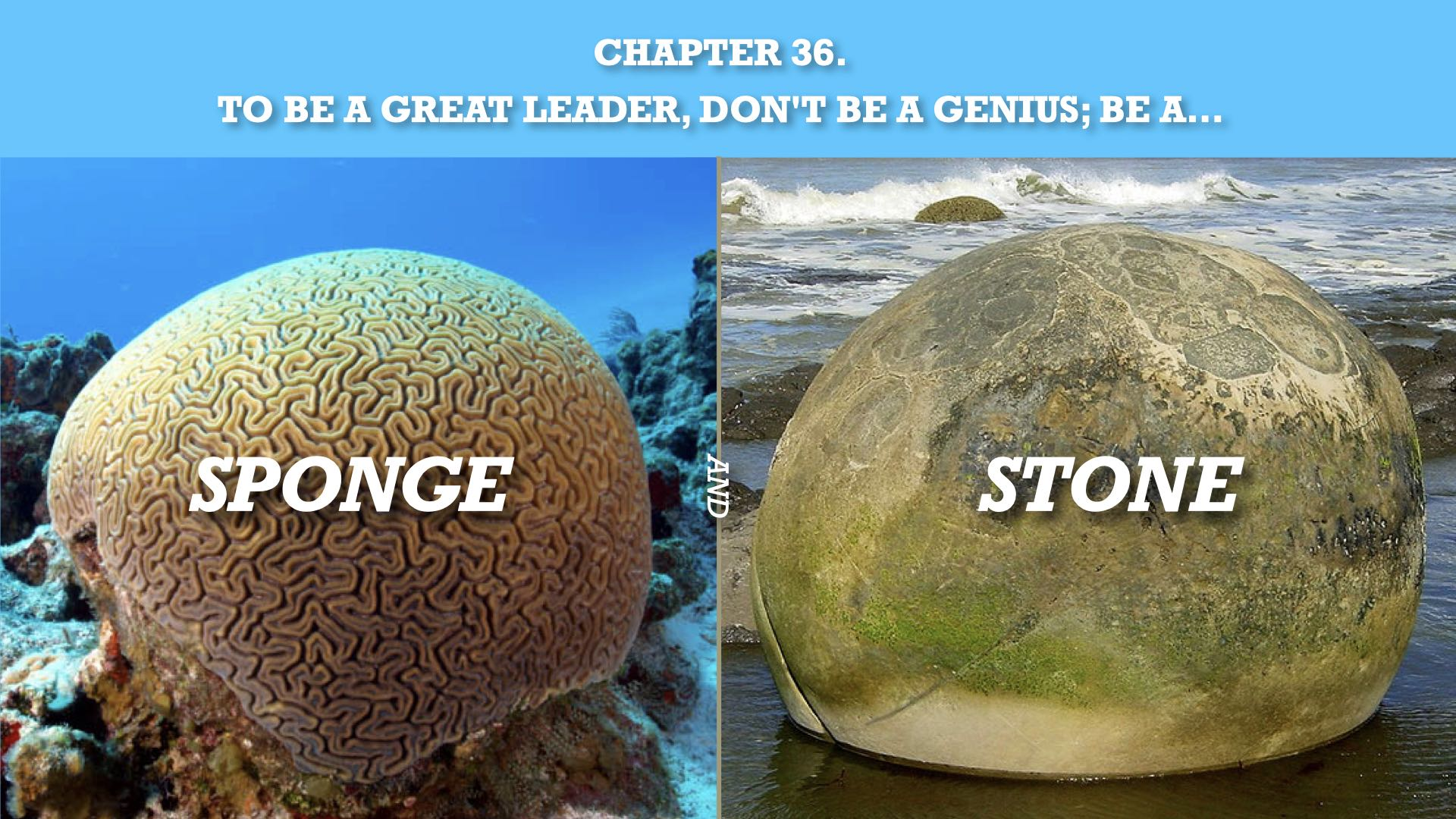 To Be a Great Leader:  Don't Be a Genius, Be a Sponge and a Stone