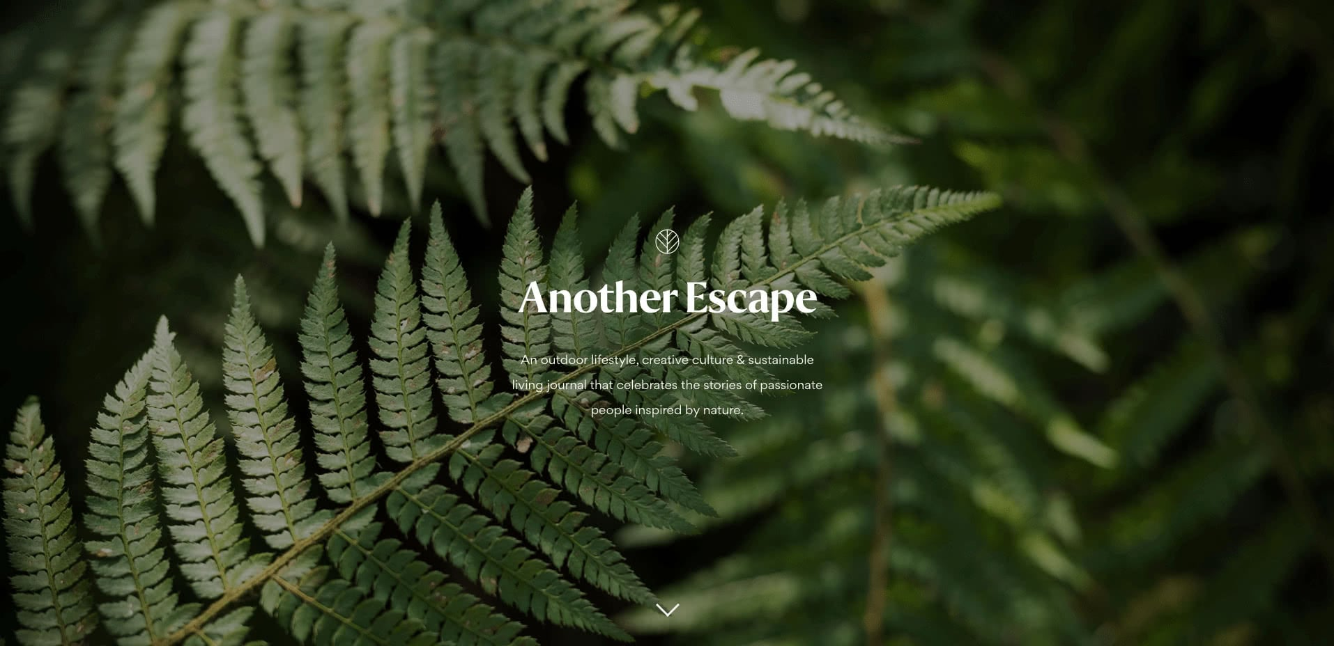 Another Escape website