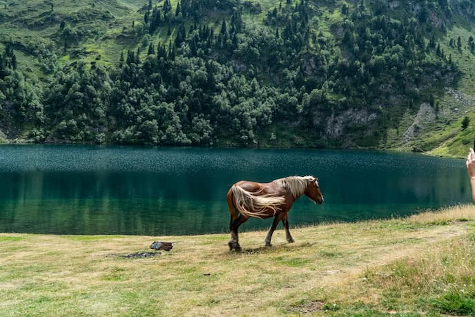 horse near mountain wild swimming lake pyrenees