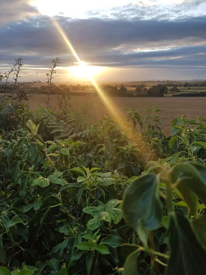 sunset over beautiful english fields perfect biking route