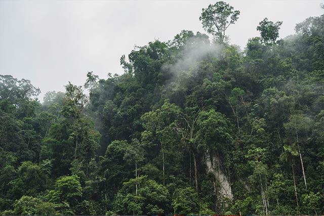 green trees amazon