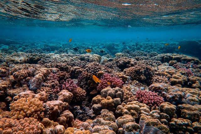 Fish swimming on coral reef