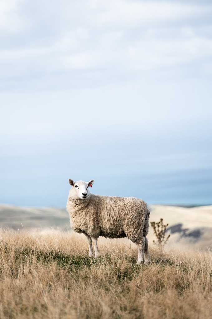 Merino wool hiking shirt