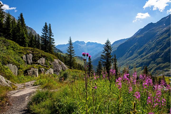 Tour du Mont Blanc Col de la Bonhomme