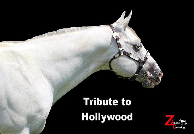 Tribute To Hollywood