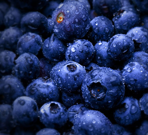Quality Control Challenges for Blueberry Importers, Exporters and Retailers