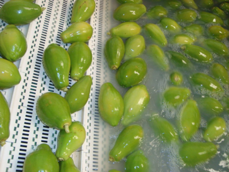 Production planning - fresh produce fruit & vegetable packing and processing