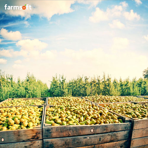 Fresh Produce Traceability Bar-code