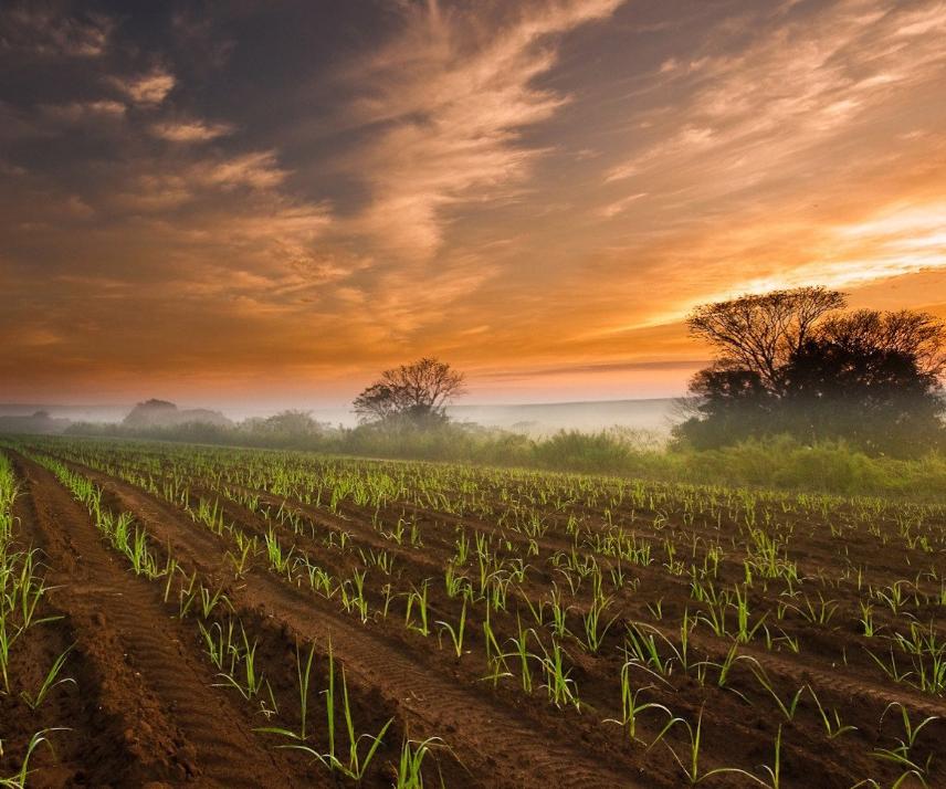 Tobacco farm software