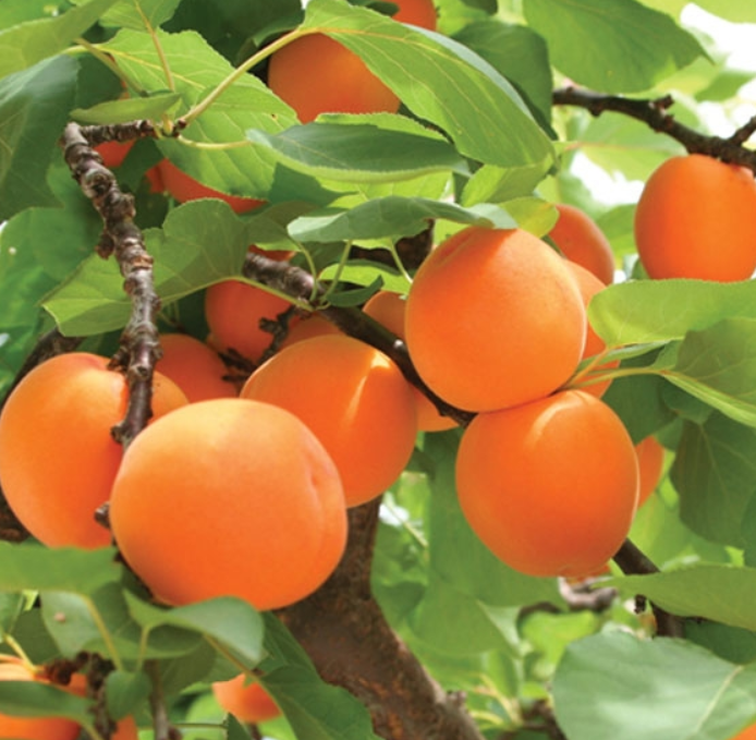 farm traceability