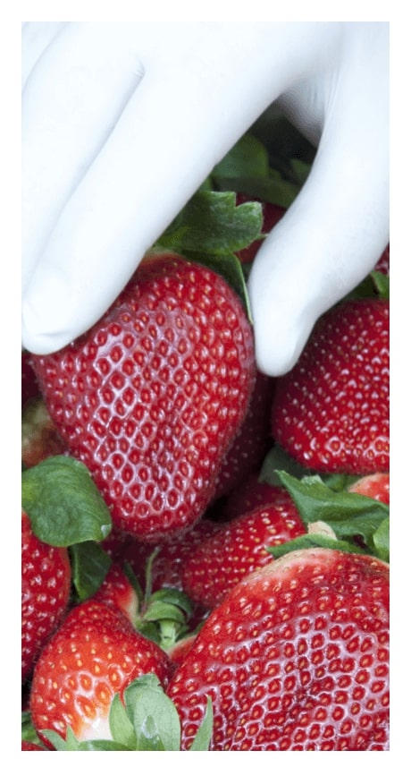 fresh produce inventory traceability fruit vegetables loose leaf packing packhouse fruit packing business management RFID