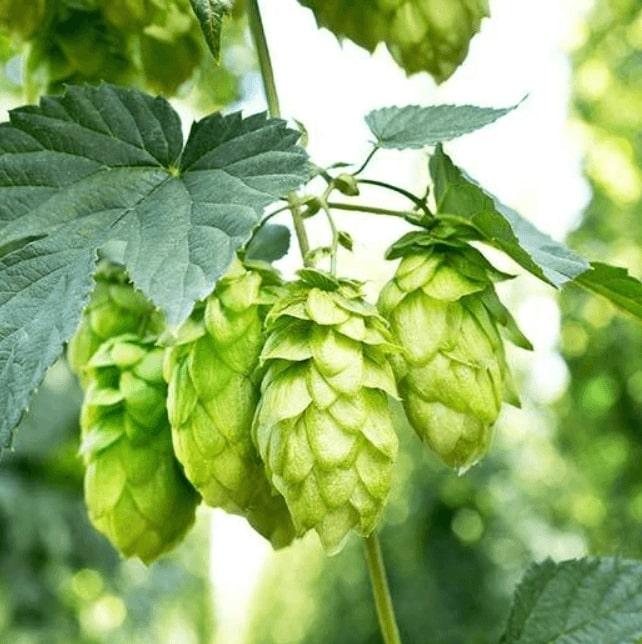 Hop Farming Software