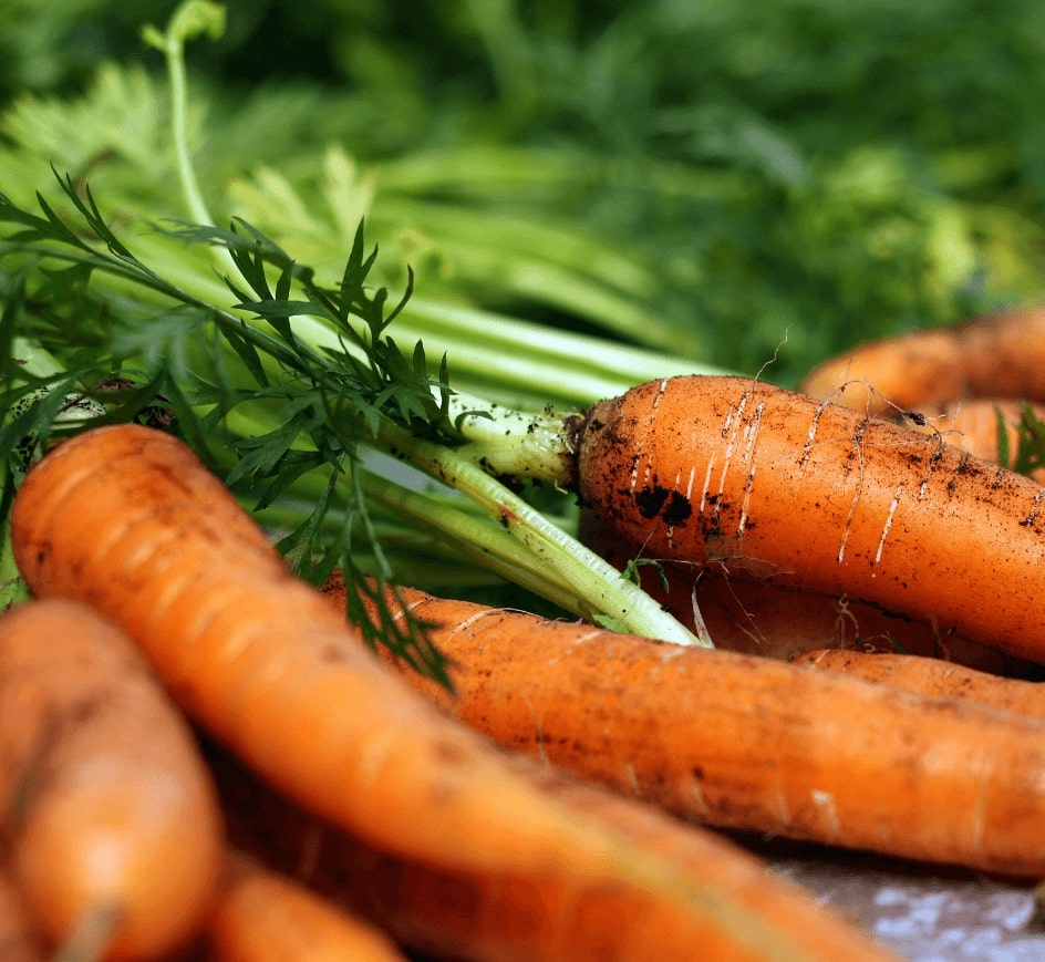 Carrot Farming Software