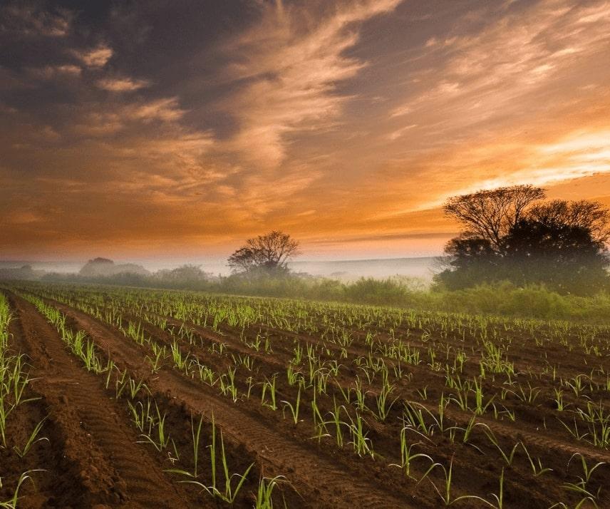 Farm Quality Control