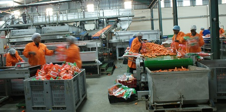 Fruit juice manufacturing squeezing quality control & processing