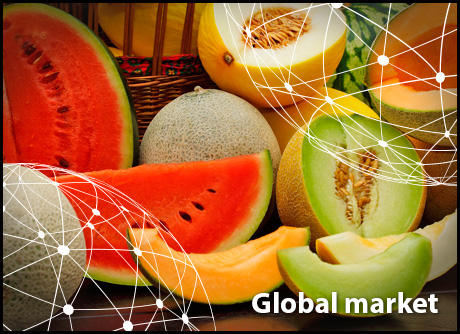 Melon packing & processing quality control / traceability
