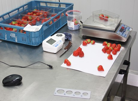 Berry packing & processing inventory QC traceability by farmsoft reduces waste and increases productivity