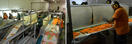 carrot packing processing washing waste traceability