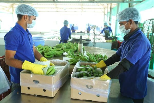 Fresh Produce Traceability India