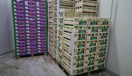 Fresh produce import packing data fruit vegetables