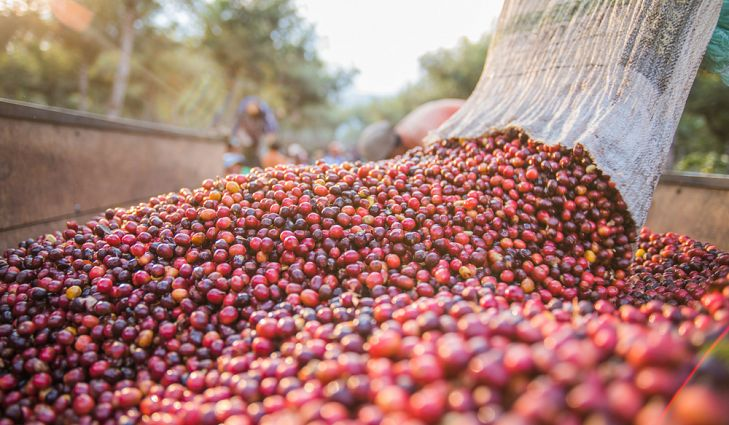Coffee manufacturing app