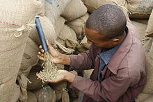 Unroasted coffee beans pour out of a slit in burlap bags and into the man's hand