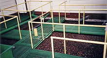 coffee manufacturing