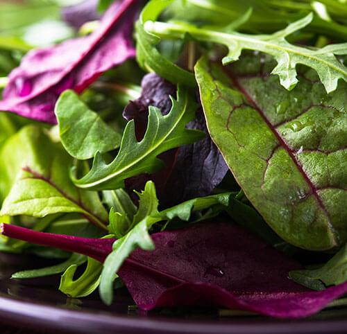 Business management app for salad packer processor wholesaler