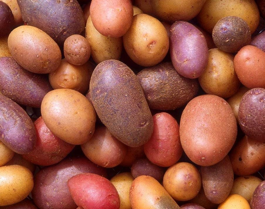 Fresh produce supply chain management app